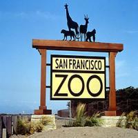 حديقة حيوان سان فرانسيسكو تحتفي بولادة نمرا سومطريا